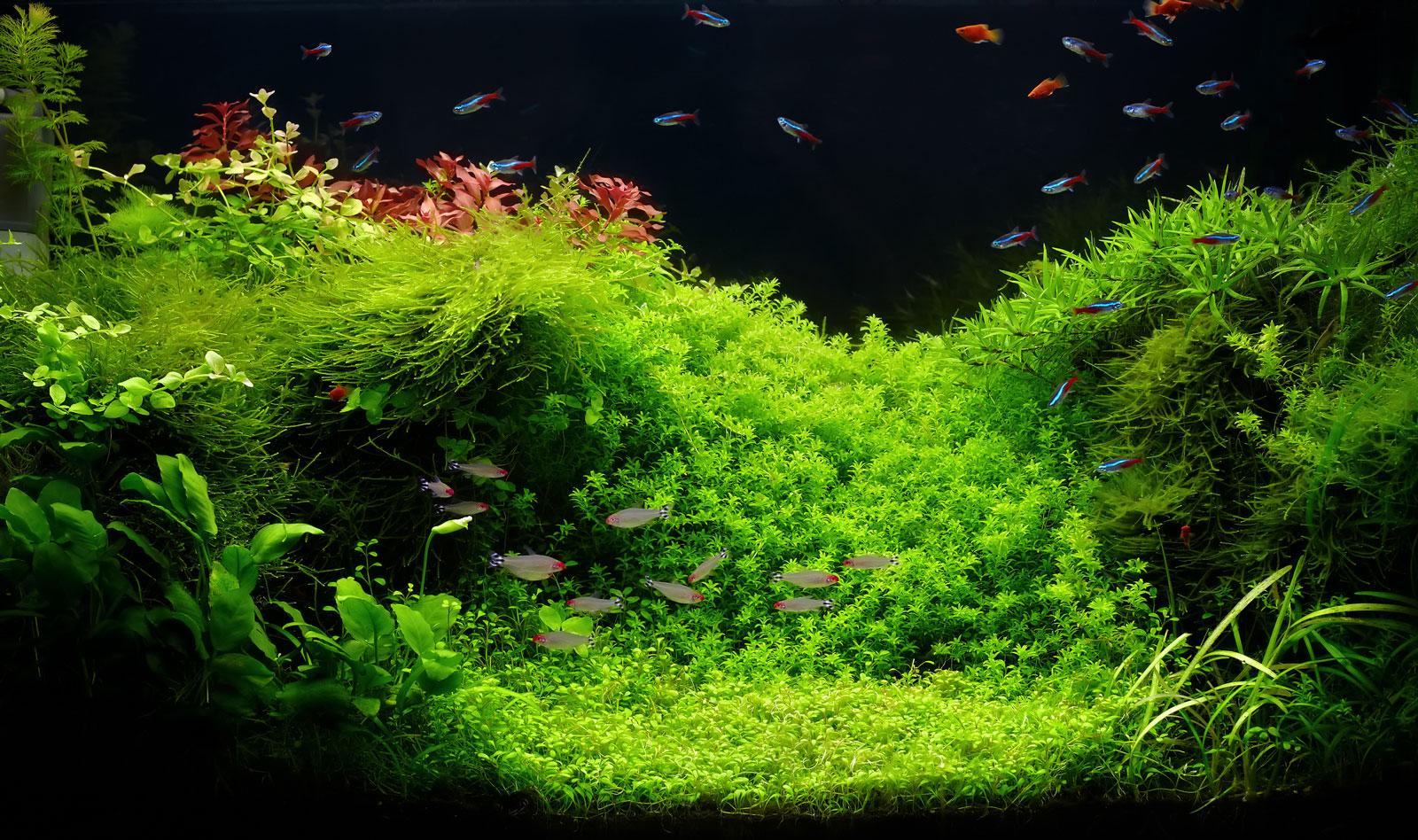 Schwedt Fauna - Aquascaping - Pflanzen fürs Aquarium