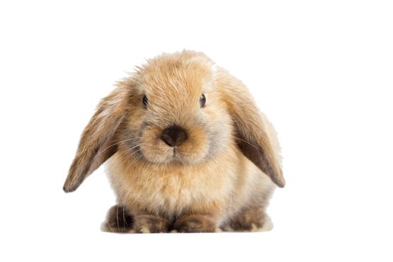 Schwedt Fauna - Kuschelige Kaninchen als Haustiere