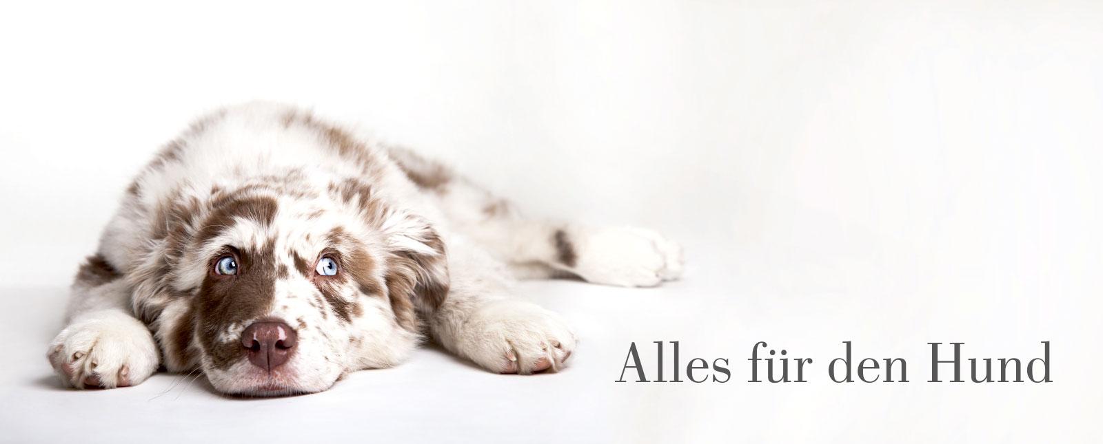 Schwedt Fauna - Alles für den Hund