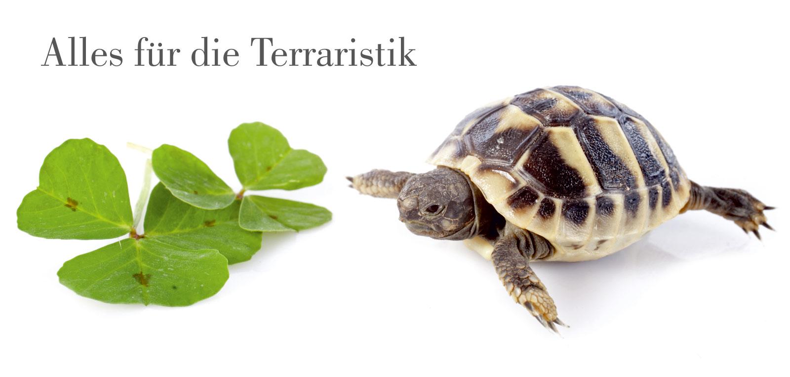 Schwedt Fauna - Alles für die Terraristik
