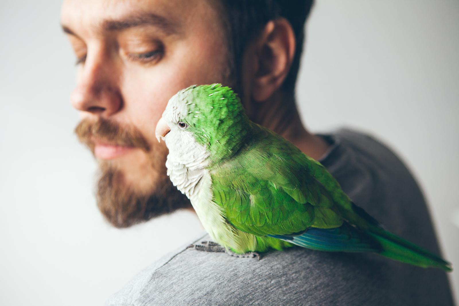 Schwedt Fauna - Heimtier Vogel als Lebensgefährte
