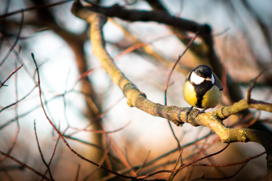 Schwedt Fauna - Wildvogelfütterung 02