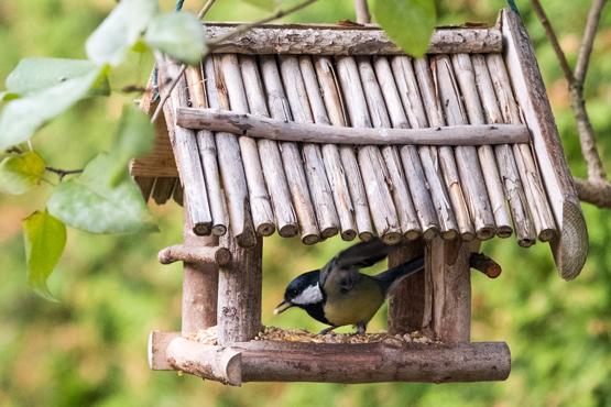 Schwedt Fauna - Wildvogelfütterung